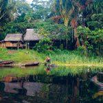 Jungle Food - Original Ideas