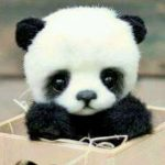 Which is a Panda's food?