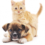 What Foods Can't Dogs And Cats Eat?
