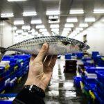 10 Health Benefits of Mackerel Fish